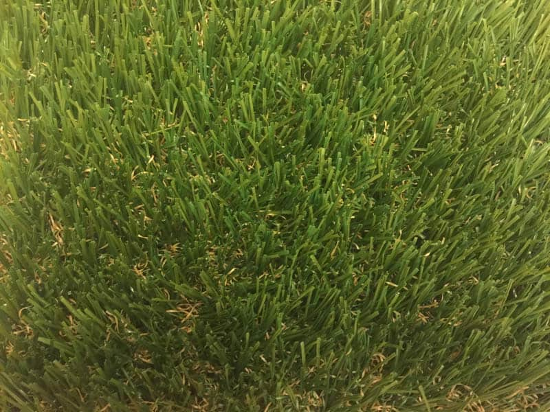 60oz Austin Fescue Top