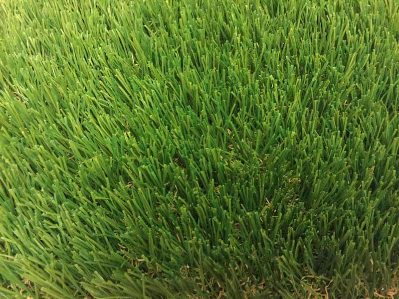 65 oz Fescue-Top
